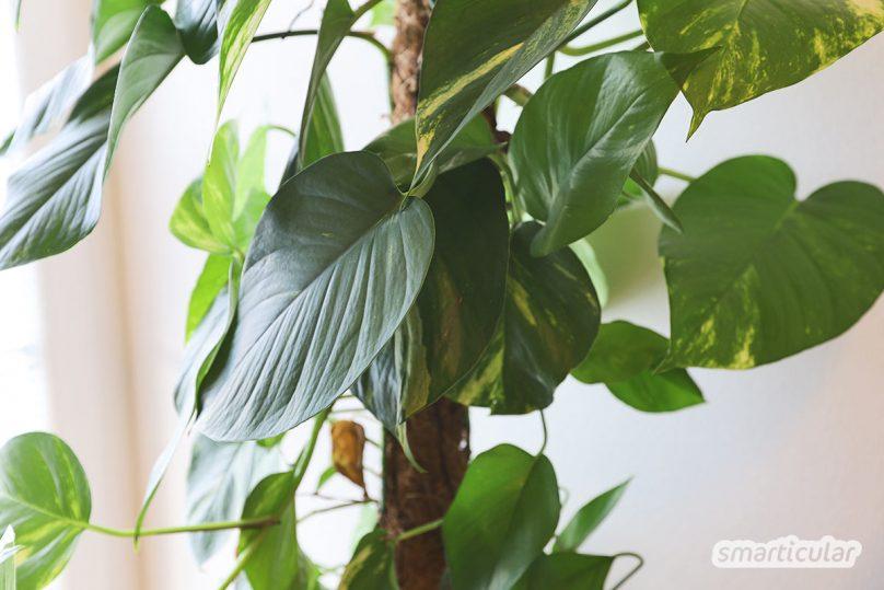 Gesunde Luft ist eine der wichtigsten Grundlagen für ein gesundes Leben. Diese Pflanzen steigern deine Lebensqualität und lassen dich wieder durchatmen