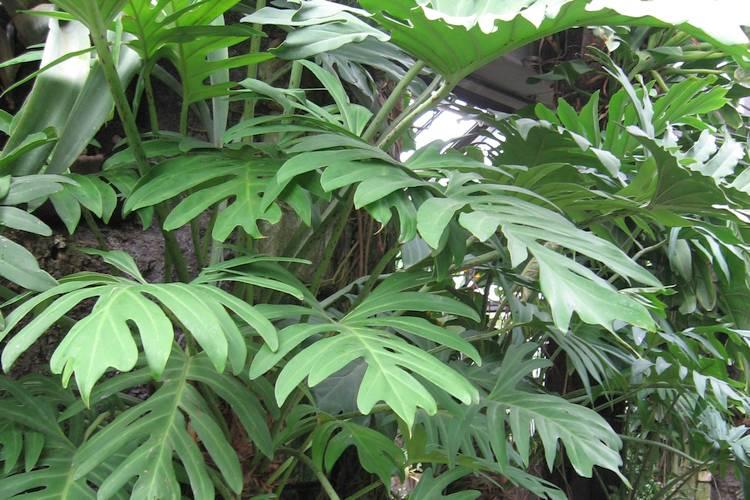 Gesunde Luft Diese Zimmerpflanzen Entgiften Und Befeuchten Die