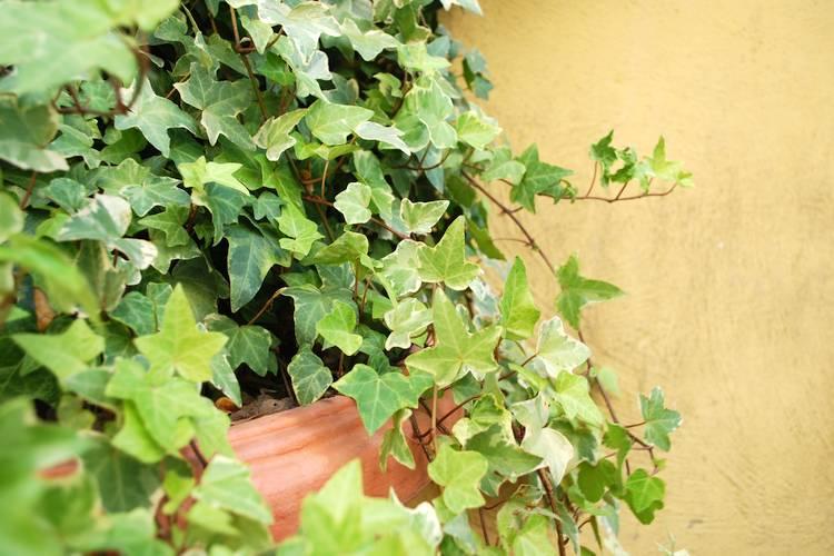 gesunde luft diese zimmerpflanzen entgiften und befeuchten die raumluft. Black Bedroom Furniture Sets. Home Design Ideas