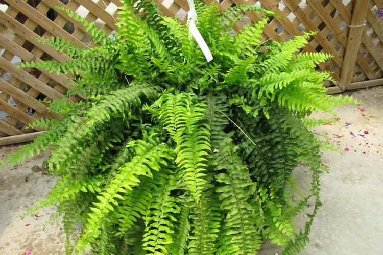 Gesunde Luft - diese Zimmerpflanzen entgiften und befeuchten die ...