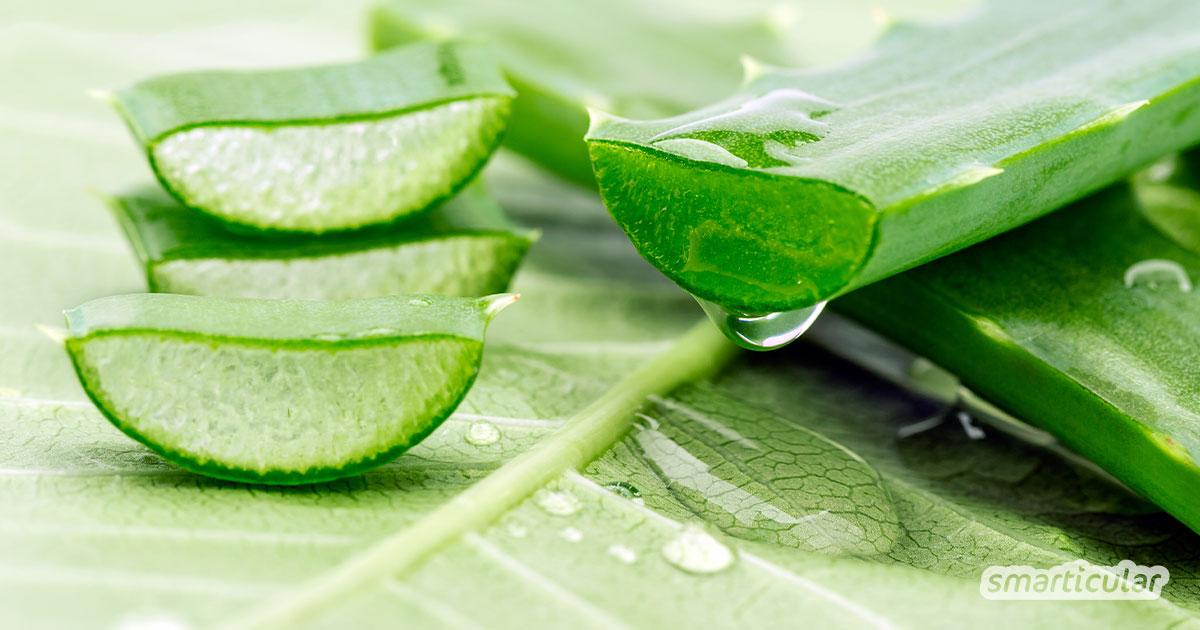 Zu starkes Sonnenlicht führt schnell zu gereizter Haut oder gar Sonnenbrand. Mit diesem Rezept stellst du einen einfachen und lindernden Balsam her.