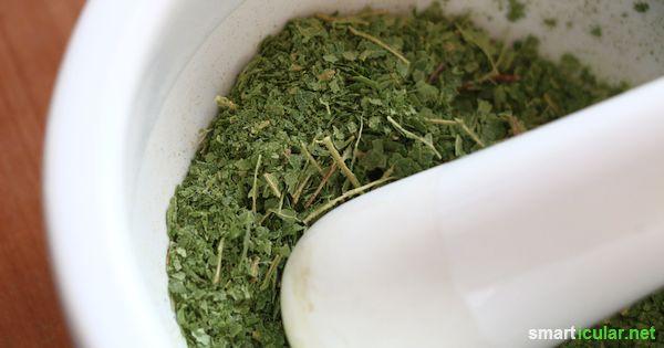 Die meisten von uns essen viel zu viel Salz, aber der bewusste Verzicht fällt oft schwer. Birkenblättern sind eine interessante Alternative zum Würzen!