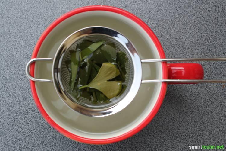 Konzentrationsfähigkeit mit Ginkgo-Tee auf natürliche Weise steigern