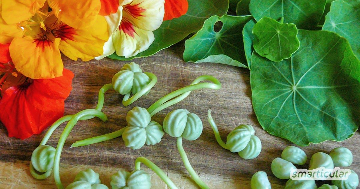 Ein pflegeleichtes Gartenwunder, welches du vielfältig in der Küche, im Garten, für Gesundheit und für gesundes Haarwachstum nutzen kannst