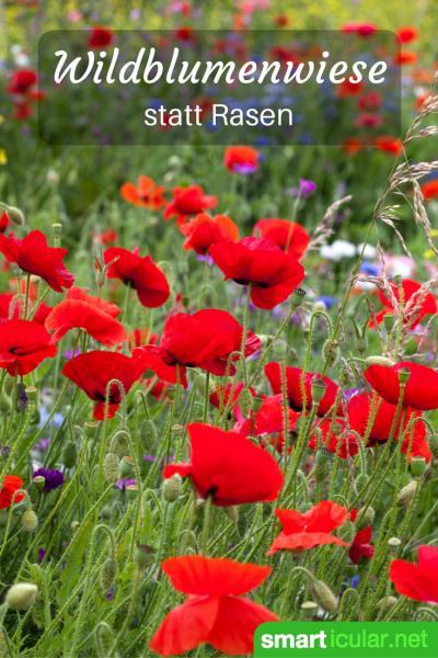 Der perfekte Rasen mag schön anzusehen sein, kostet aber viel Zeit und Energie. Dabei spricht viel dafür, eine kleine Ecke für wilde Blumen frei zu halten!