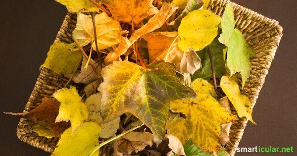 Herbstlaub sinnvoll weiternutzen: Goldene Deko und wertvoller Gartenhelfer