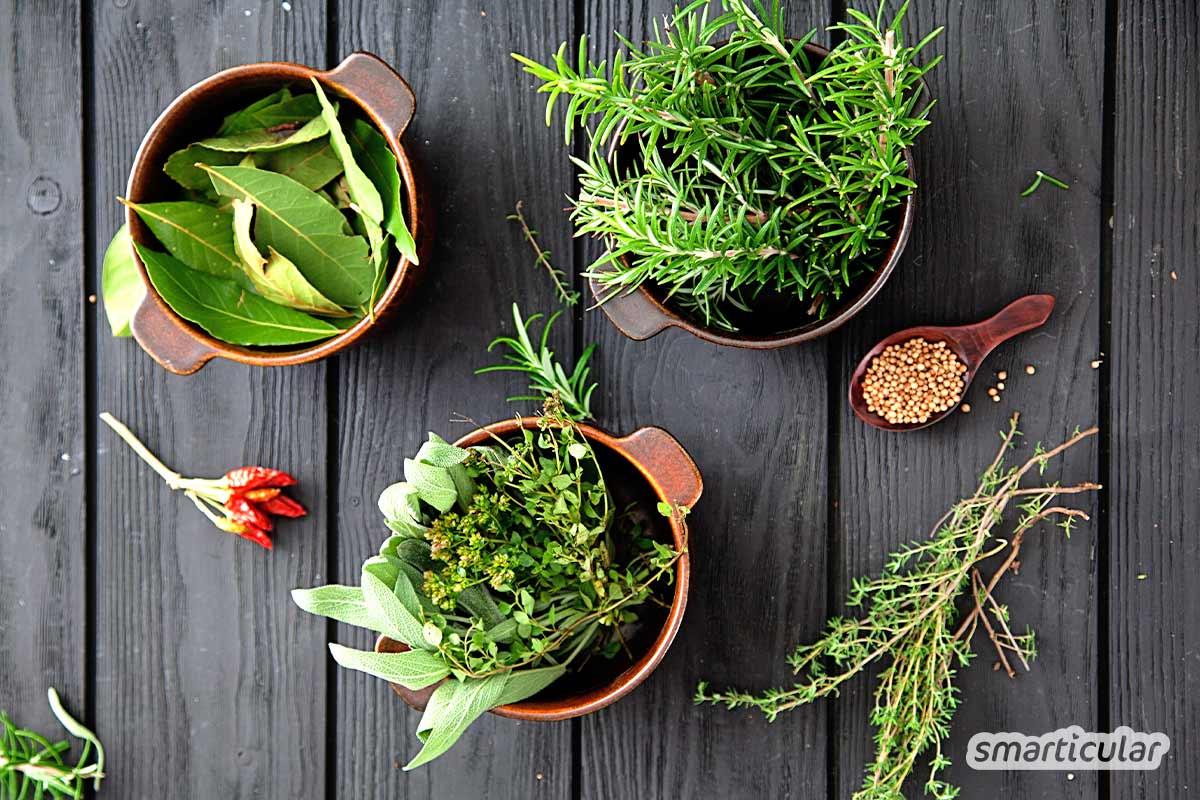 Gesunde Würze aus der Natur! Aus Wildkräutern und Salz ein köstliches Kräutersalz kreieren. Hier findest du geeignete Zutaten und einfache Rezepte.