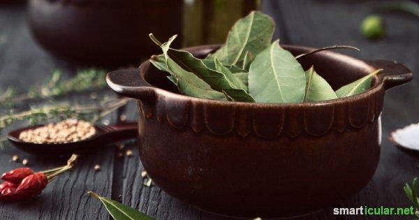 Was echter Lorbeer für deine Gesundheit tun kann. Anwendungen für Lorbeeröl und Lorbeerblätter. Mit vielen Tipps und Rezepten.