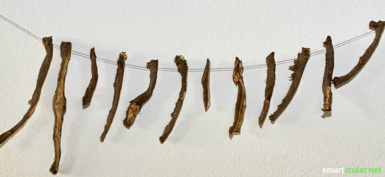Diese gesunde Wurzel stärkt dich in den kalten Monaten! Löwenzahnwurzeln richtig ernten, verarbeiten und zubereiten.
