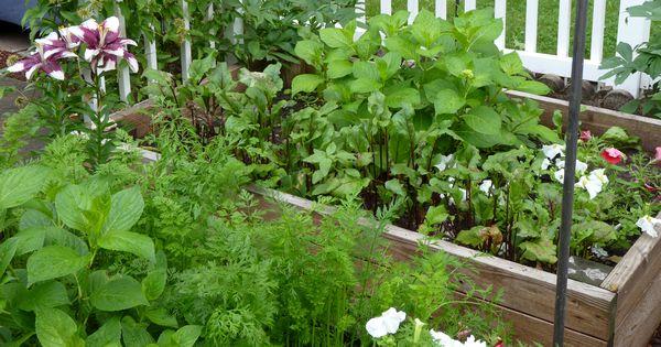 Mit einem Hochbeet kannst du auf kleinem Raum das ganze Jahr gesundes Gemüse ernten. Hier erfährst du, was zu beachten ist und wie du es selbst baust.