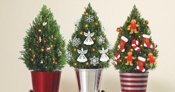 Baum ohne Reue – Tipps für den nachhaltigen Weihnachtsbaum