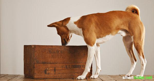 Wie du für deinen Hund mit wenigen Handgriffen aus einem alten Karton ein tolles Spielzeug basteln kannst.