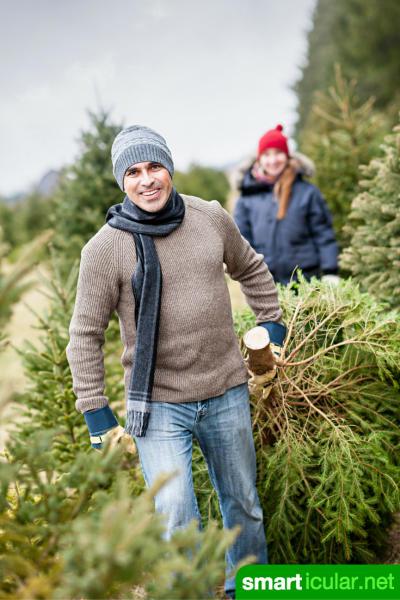 Nein Danke zu Pestiziden im weihnachtlichen Wohnzimmer! Mit diesen Tipps findest du den umweltfreundlichen Weihnachtsbaum, der am besten zu dir passt.