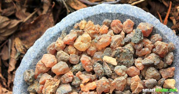 Myrrhe ist ein heilkräftiges Baumharz, das du auch heute noch vielfältig zur Heilung und zum Räuchern nutzen kannst.