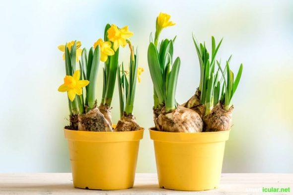 Ein Blumenstrauß ist zwar schön, aber auch schnell verwelkt. Mit diesen Tipps kannst du Blumen-Freunden eine nachhaltige Freude machen.