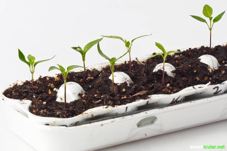Teure und umweltschädliche Anzuchttöpfe aus Torf kannst du dir sparen. So leicht stellst du deine eigenen Anzuchttöpfe her!