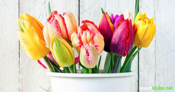 mit diesen tipps bleiben schnittblumen länger frisch, Garten und erstellen