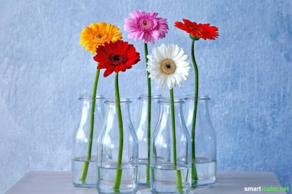 Mit Diesen Tipps Bleiben Schnittblumen Länger Frisch