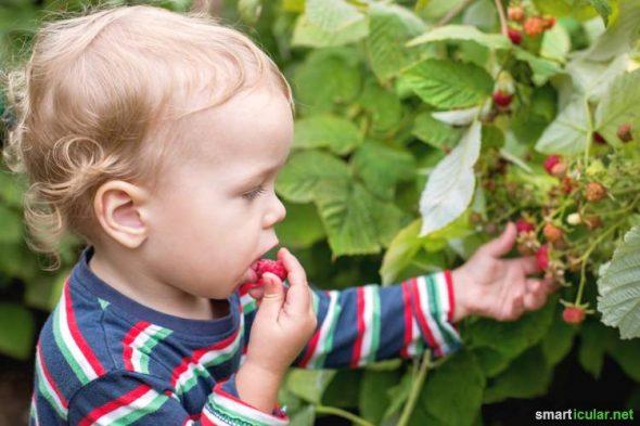 Garten Mit Kindern Gestalten Tipps