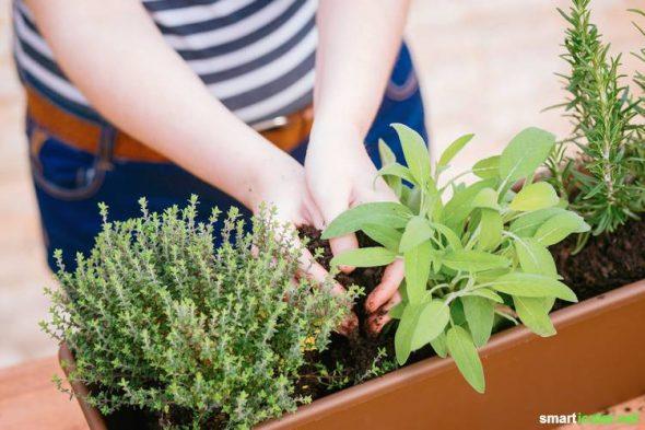 7 Tipps Fur Den Effizienten Balkongartn Gemuse Obst Und Mehr