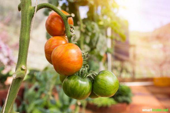 7 Tipps Für Den Effizienten Balkongartn - Gemüse, Obst Und Mehr Gemuse Im Blumentopf Garten Balkon Tipps