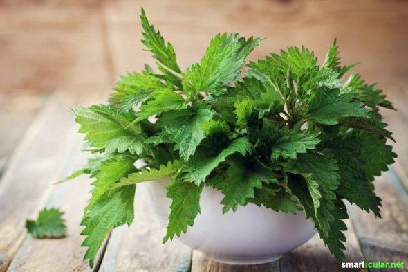 Wenn du fit und vital in den Frühling kommen willst, dann probiere doch mal die Brennnessel-Kur mit Frischpflanzen-Presssaft!