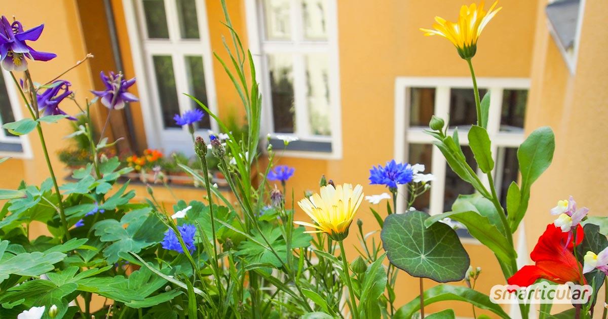 Essbare Blumen und Blüten wie Rosen, Lavendel und Kapuzinerkresse sehen auf dem Balkon nicht nur schön aus, sondern bereichern auch deinen Speiseplan!