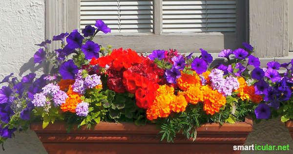 Der Platz auf dem Balkon ist begrenzt aber diese Blumen sehen nicht nur schön aus, sondern bereichern auch noch deinen Speiseplan!