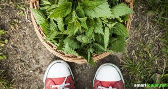 Ein Frühjahrsputz braucht keine teuren Reiniger aus dem Supermarkt. Mit diesen Tipps bringst du dein Zuhause umweltschonend auf Hochglanz!