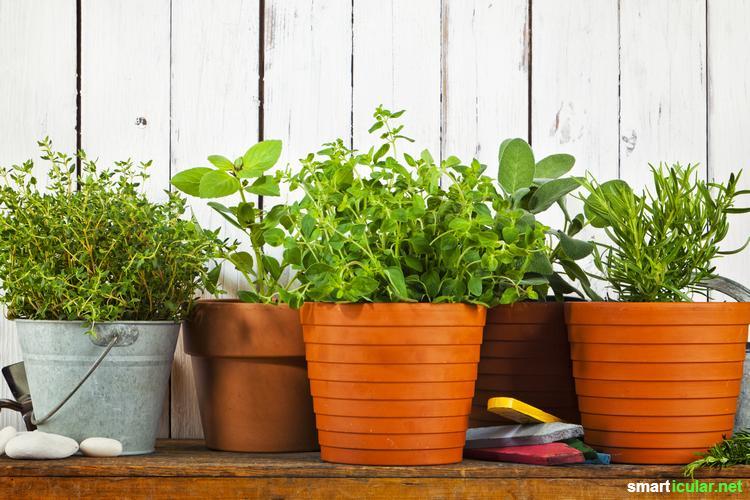 Dein Balkon ist klein und schattig? Mit diesen Tipps kannst du ihn trotzdem in einen bunten und schmackhaften Kräutergarten verwandeln!