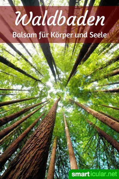 Geh nicht einfach irgendwo spazieren, wenn du einen Wald in der Nähe hast! Das alles können die Heilkräfte des Waldes für deine Gesundheit tun.