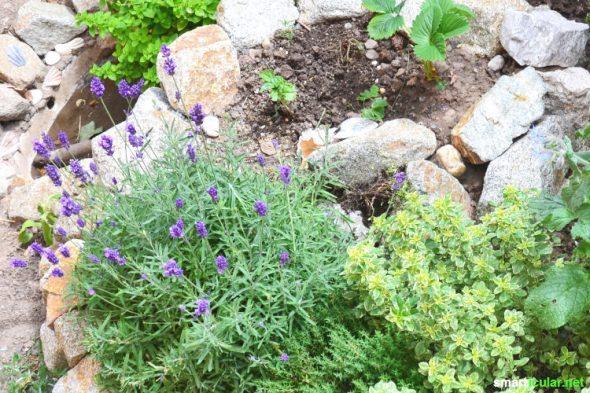 10 Pflanzen Die In Deinem Apothekergarten Nicht Fehlen Sollten