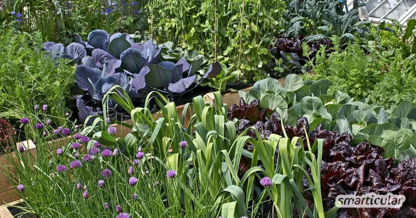Mit den richtigen Beetnachbarn werden deine Pflanzen gesünder, stärker und ertragreicher - ganz ohne künstlichen Dünger oder Pflanzenschutzmittel.