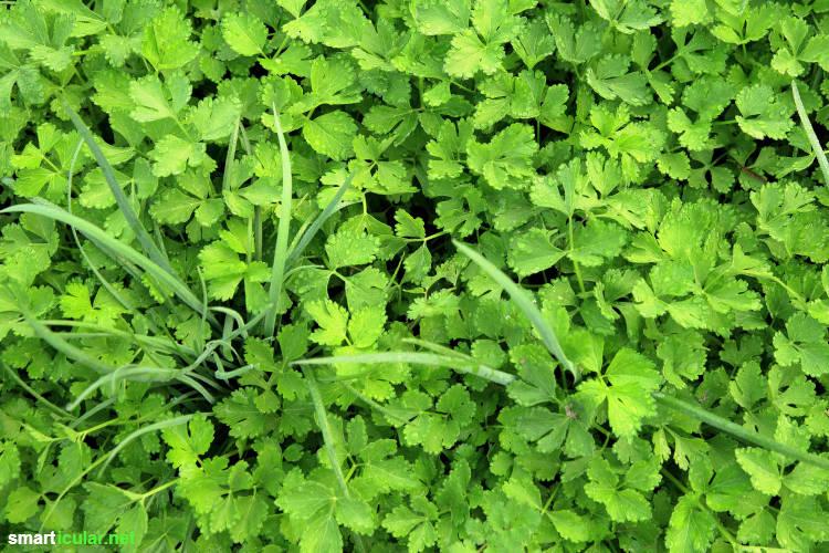 Mischkultur Im Garten Diese Gemüsesorte Und Kräuter Solltest Du