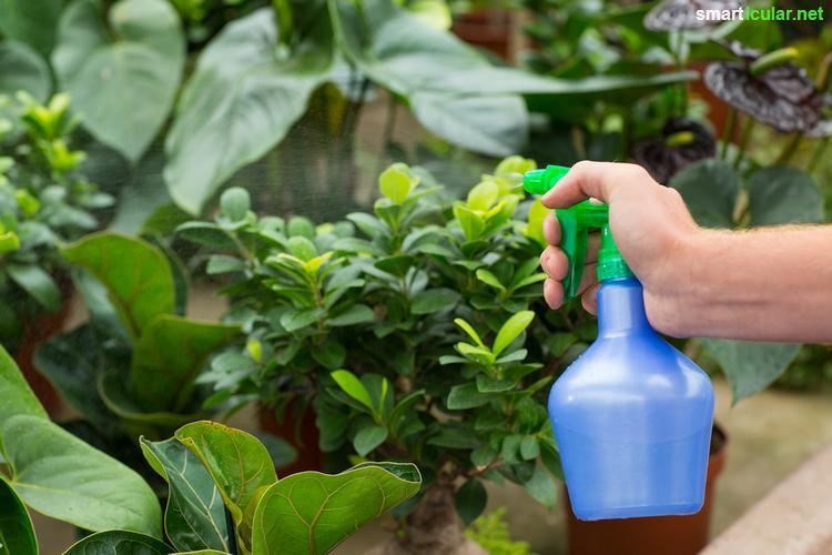 nat rliche pflanzenschutzmittel selbst herstellen aus pflanzen. Black Bedroom Furniture Sets. Home Design Ideas