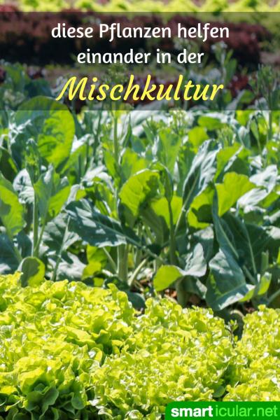 Mischkultur Im Garten - Diese Gemüsesorte Und Kräuter Solltest Du ... Dunger Fur Den Garten Pflanzen Kuche
