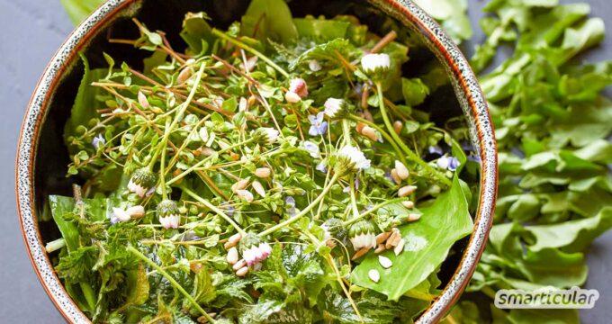 Der Winter ist vorbei und überall sprießt junges Grün! Diese gesunden Kräuter kannst du leicht finden, identifizieren und für deinen Salat nutzen.