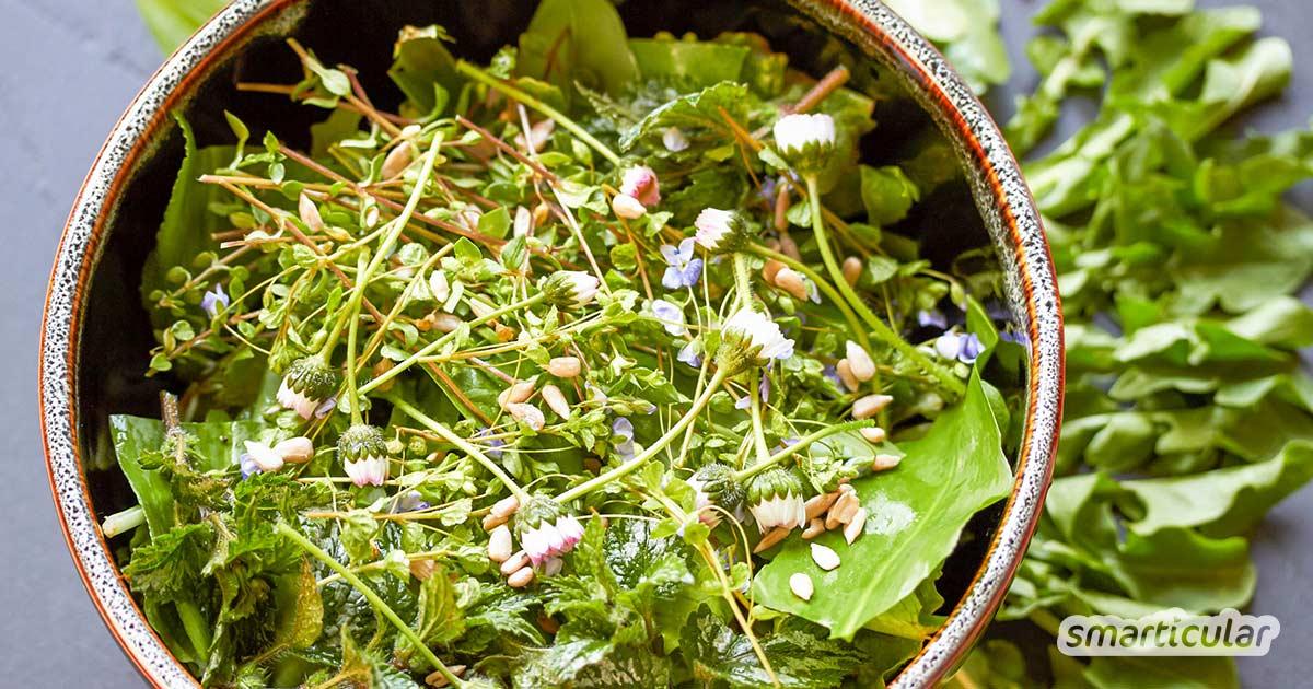 Wildkräuter für einen Frühlingssalat bereichern nicht nur die Speisekarte, sondern enthalten jede Menge gesunde Vitamine und Mineralien, die im Frühjahr sonst rar sind.