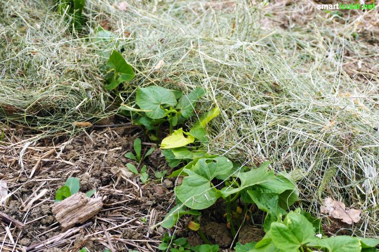 Die richtige Mulchschicht im Biogarten spart Wasser und Dünger, unterdrückt Unkräuter und schafft ein ideales Mikroklima für Nützlinge im Boden.