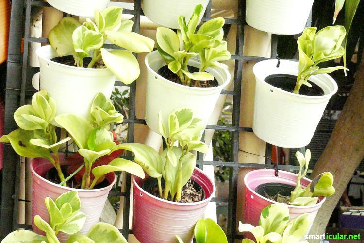 Zu wenig Platz auf dem Balkon oder im Garten? Gestapelte Töpfe, Blumenampeln und Pflanzenleitern nutzen die Höhe als vertikaler Garten für mehr Grünfläche.