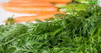 Möhrengrün ist mindestens genauso gesund wie die orangen Rübchen. Mit diesen Rezepten kannst du schmackhafte Speisen daraus zaubern, anstatt es wegzuwerfen!