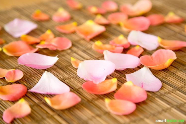 Die Rose fasziniert nicht nur mit Schönheit und Duft, sondern auch als Gelee, Sirup oder Rosenzucker. Lecker, schnell gemacht und viel länger haltbar als die Blüte selbst!