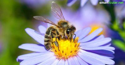 Jeder kann etwas für die Bienen tun! Dafür reicht schon ein kleiner Balkon, auf dem du bienenfreundliche Blumen und Kräuter pflanzt, die auch dir gefallen werden.