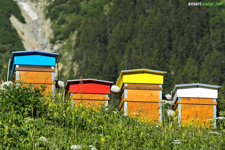 Honig schmeckt nicht nur lecker, er enthält auch zahlreiche Substanzen, die du für die Haut- und Haarpflege einsetzen kannst - mit 7 Rezepten.