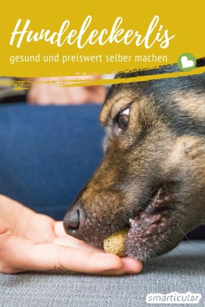 Es muss nicht immer Fertigfutter sein: Diese Wildkräuter kannst du in gesunde Leckerlis für Hunde verwandeln!