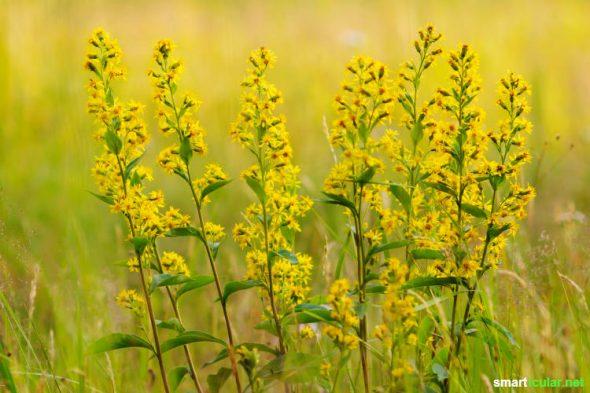 Schnittblumen bereiten nur kurze Freude und landen dann im Abfall. Genauso schön anzusehen und dazu noch richtig gesund ist ein Teestrauß aus Blumen und frischen Kräutern!