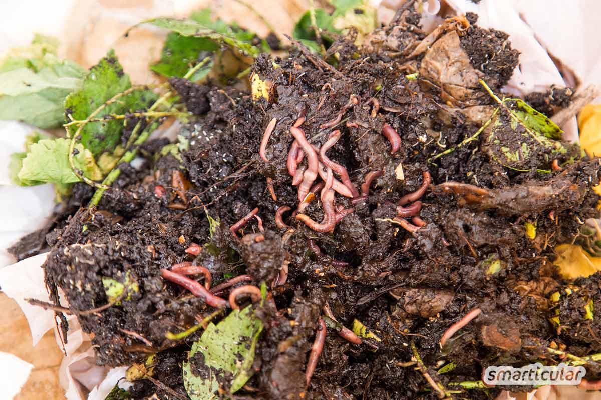 Mit einer Wurmkiste kannst du Grünabfälle in hochwertige Pflanzerde verwandeln, selbst wenn du keinen Platz für einen Komposthaufen hast. Diese Schritt-für-Schritt-Anleitung zeigt, wie es geht.