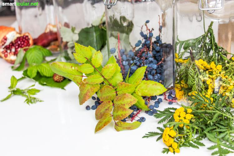 Wenn T-Shirts ergraut oder ausgeblichen sind, dann versuch's doch mal mit Solarfärben! Mit den richtigen Pflanzen, einem Gurkenglas und der Sonne gelingt das Färben mühelos.