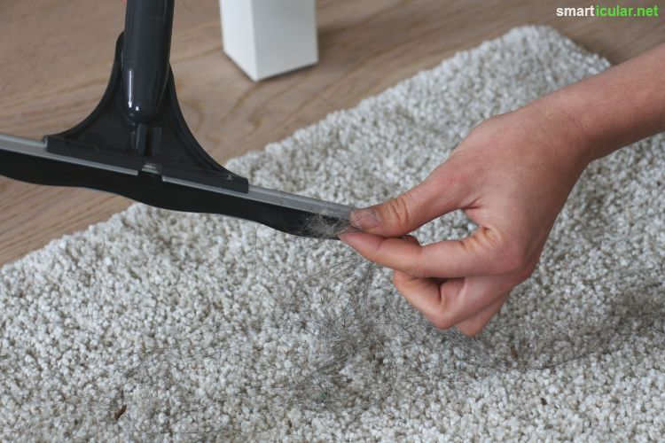 teppich reinigen mit hausmitteln fabulous kosten fr die teppich reinigung with teppich reinigen. Black Bedroom Furniture Sets. Home Design Ideas