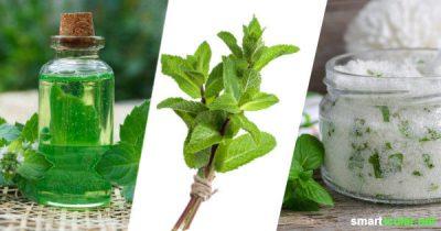Pfefferminze hat nicht nur ein unverwechselbares Aroma, sondern besitzt auch viele gesunde Inhaltsstoffe. Probiere doch mal eines dieser Rezepte, um ihre Heilwirkung für das ganze Jahr zu konservieren!